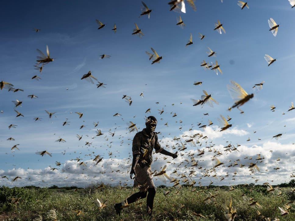 Etíopes se abrem para o Evangelho em meio a enxames de gafanhotos