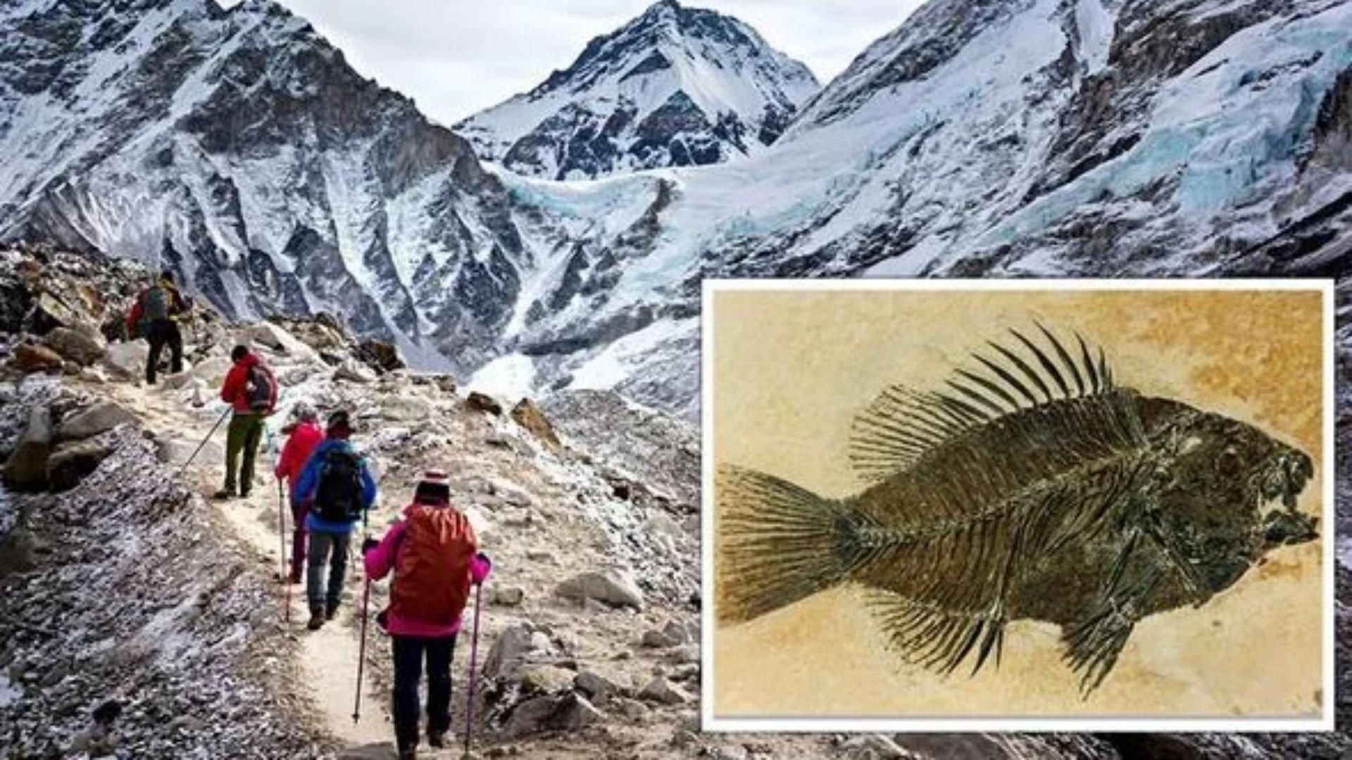 Fósseis marinhos encontrados no topo do monte Everest podem ser a prova do dilúvio bíblico