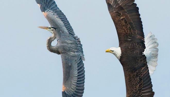 Quem é você na tempestade: garça ou águia?